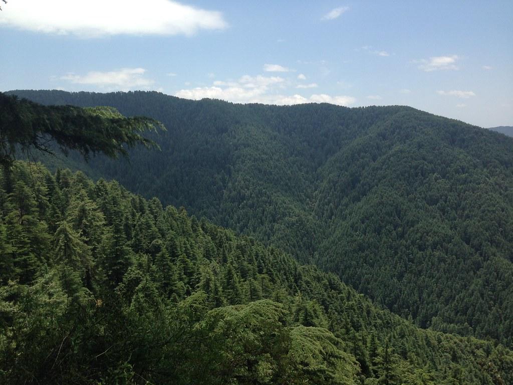Narkanda forests