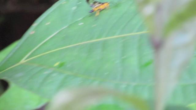 Cool Yellow Wasp