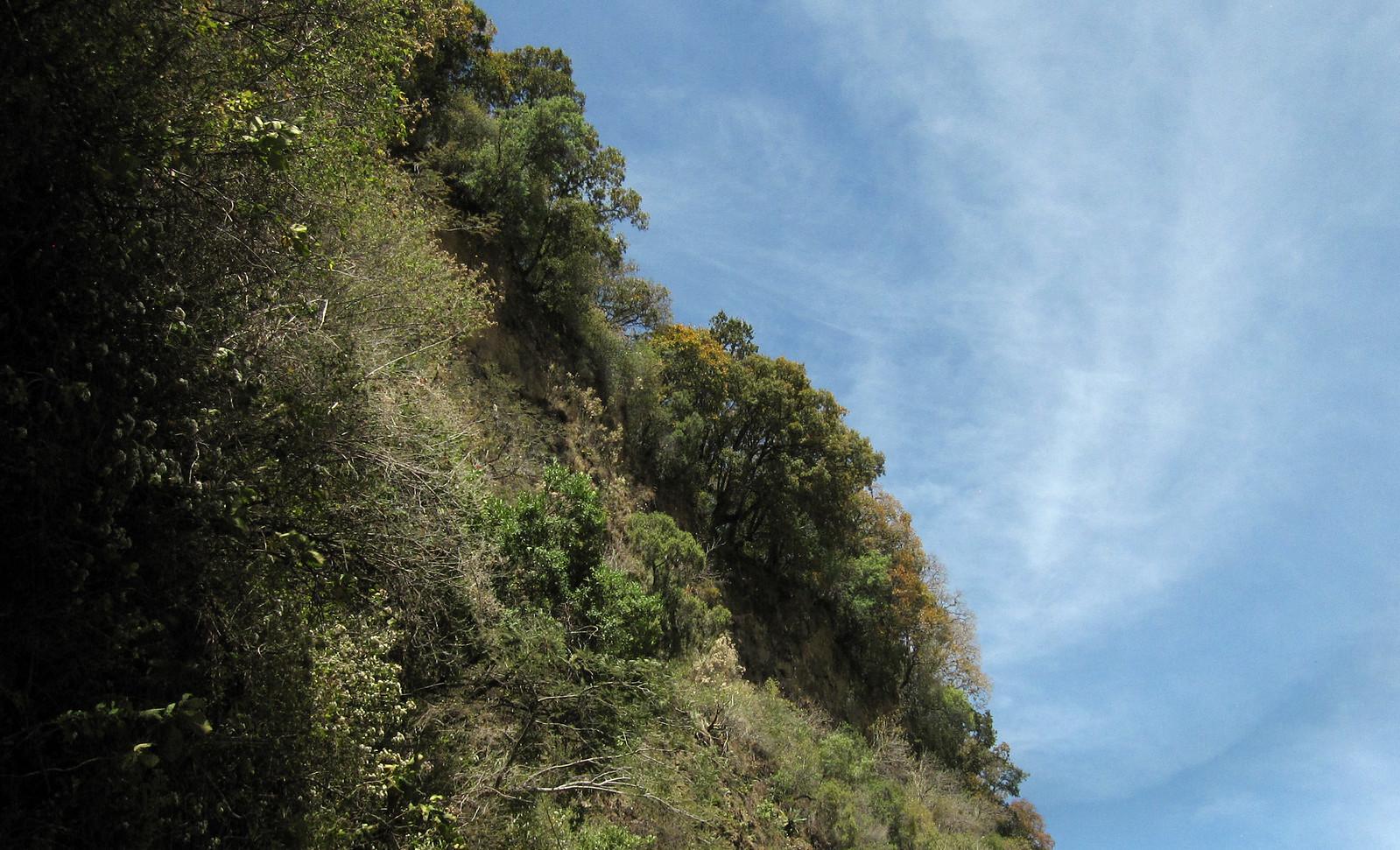 Bosque 06