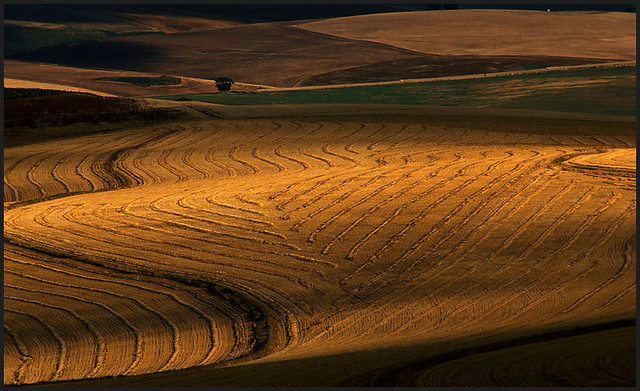 Ploughed wheatfields