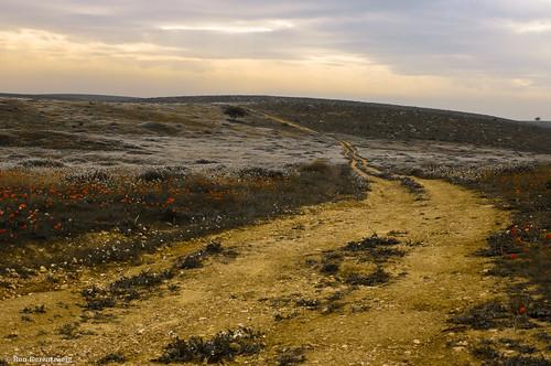 flowers blue red white yellow clouds landscape israel path ron trail anemones darom rozentzweig ronrozentzweig