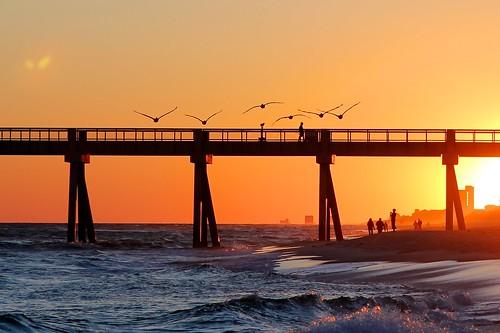 sunset beach pelicans formation 365 navarre