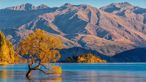 morning travel autumn newzealand mountain lake mountains tree fall water canon landscape outdoor willow southisland otago dslr wanaka 70200 lakewanaka 6d 70200f4l canon6d queenstownlakes thatwanakatree