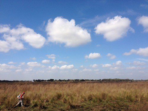 ranch usa heritage nature us florida wildlife corridor conservation adventure pasture everglades fl agriculture exploration habitat wetland greenway wrp
