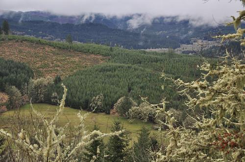 Eugene, Oregon area production forestland | by NRCS Oregon