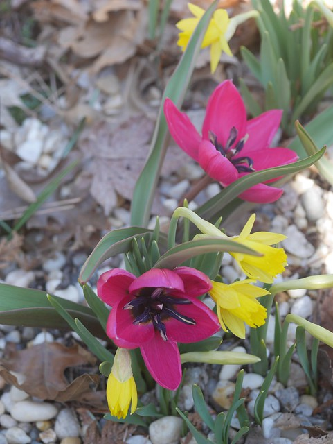 火, 2014-04-01 13:41 - Brooklyn Botanic Garden