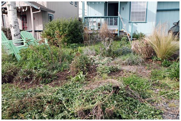 Front yard weedy garden mess | The Creative Salad | Flickr