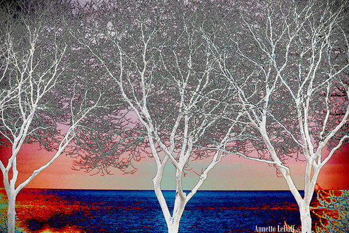 pink blue trees sunset lake art water three abstractart horizon abstraction netart lakestclair favorited musictomyeyes connoisseur digitallyaltered neffpark grossepointemi colorphotoaward ourdream negatone flickrwiki visionqualitygroup thehypotheticalaward crazyandgeniusesofflickr artnetflickrworld tmiyourartandnature photoannetteleduff annetteleduff donnasmagicalpix artselectedbyadministrators leduffcameraart treestreetopsandsky 02182012