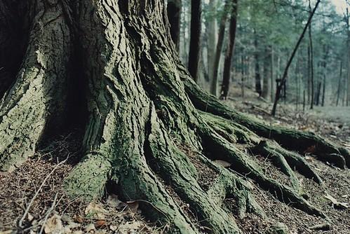 ohio tree film 28mm bark february 2012 youngstown newlens nikonem millcreekpark