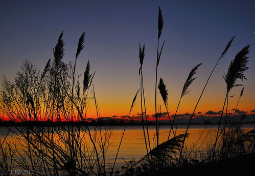 morning blue winter red sky orange color beach water sunrise reeds point dawn nikon long glow connecticut newengland longisland sound marsh northeast 2012 noank groton southeastern grotonlongpoint d5000 eskerpoint 100commentgroup mygearandme mygearandmepremium mygearandmebronze mygearandmesilver mygearandmegold