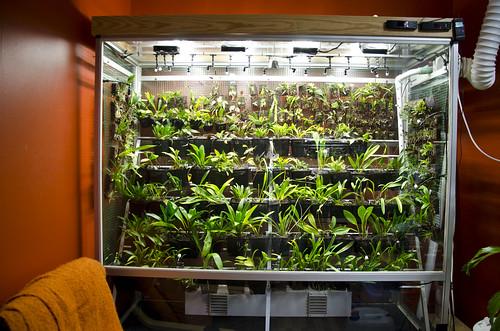 Cool vivarium rebuild | by orchidkarma