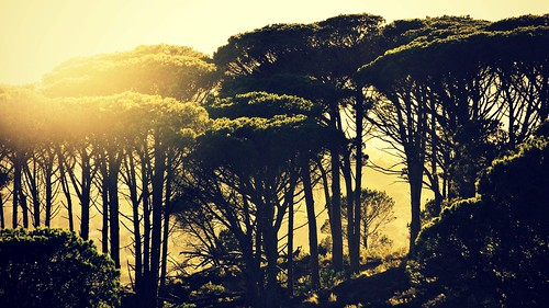 travel trees sun sunlight sunshine forest sunrise landscape southafrica capetown landschaft