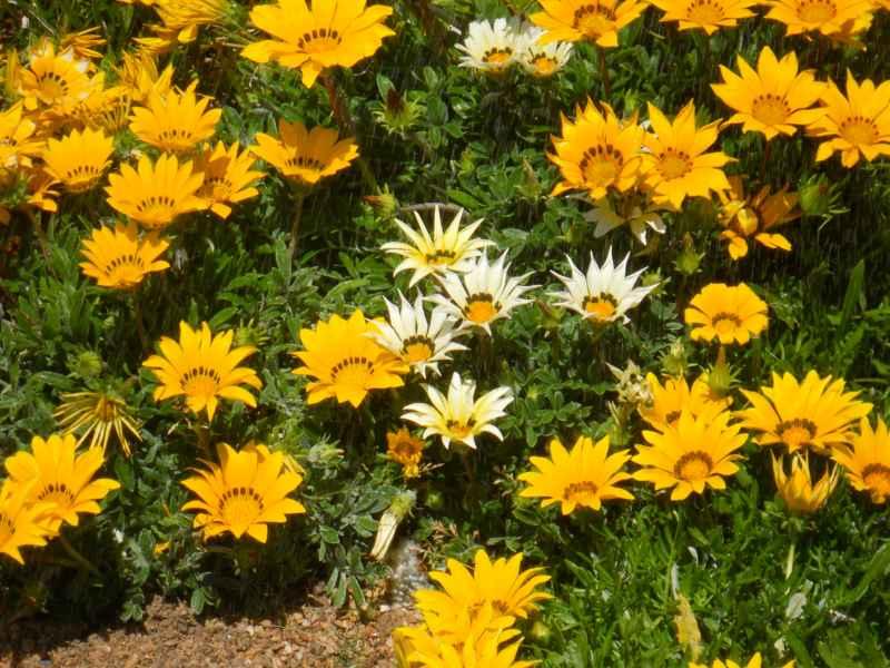 Jardin con plantas y piedra decorativa 6
