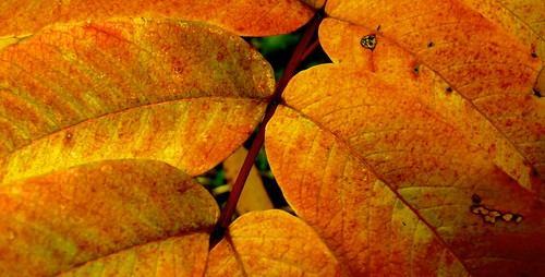 Yellow Leaves Queenswood Park Herefordshire #Dailyshoot Patterns | by Leshaines123