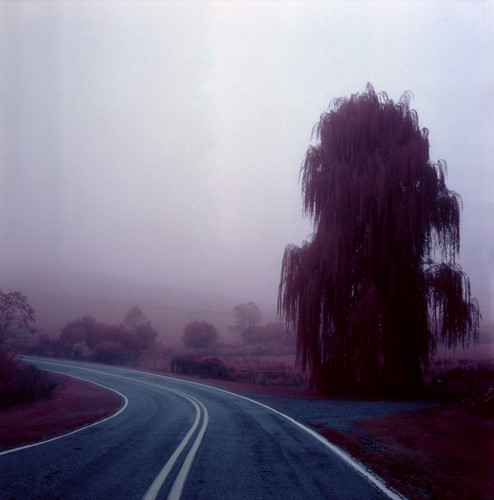 road mist fog landscape nebel scenic northcarolina willow infrared eir irg