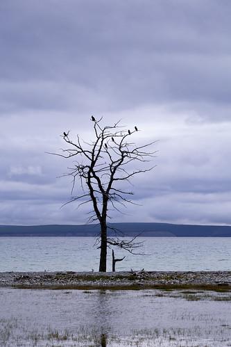Birds on a bare tree
