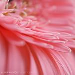pink alchemy