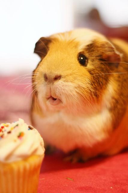 Piggy Wishes