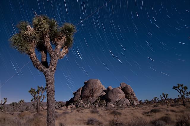 Joshua Tree in Full Moonlight