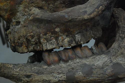Ancient Rhino | by Ikhlasul Amal