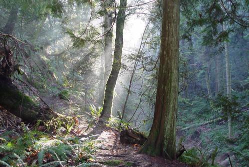 forest ambientlight britishcolumbia vancouverisland