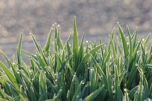 plants plant nature water canon drops bokeh southcarolina drips travelersrest 60d 55250mm mygearandme