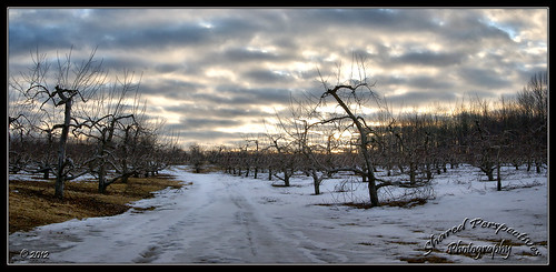 trees winter sky panorama snow clouds maine newengland orchard alfred sonya200 sharedperspectivesphotography