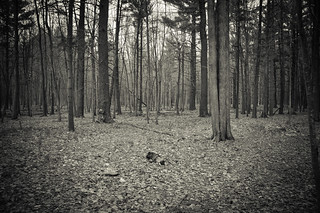 Waiting for Spring Buds in Whiting Forest | by Randi Deuro