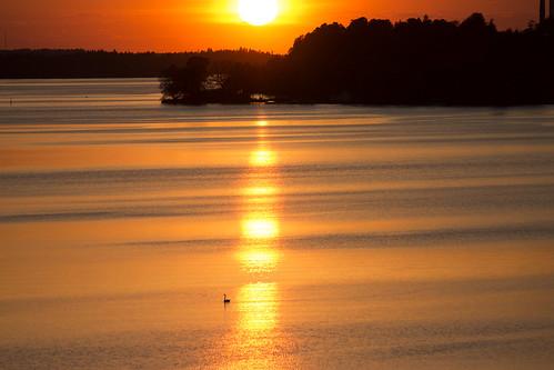 sunset lake swan stockholm solnedgång mälaren sjö svan bromma lakemälaren lovöbron