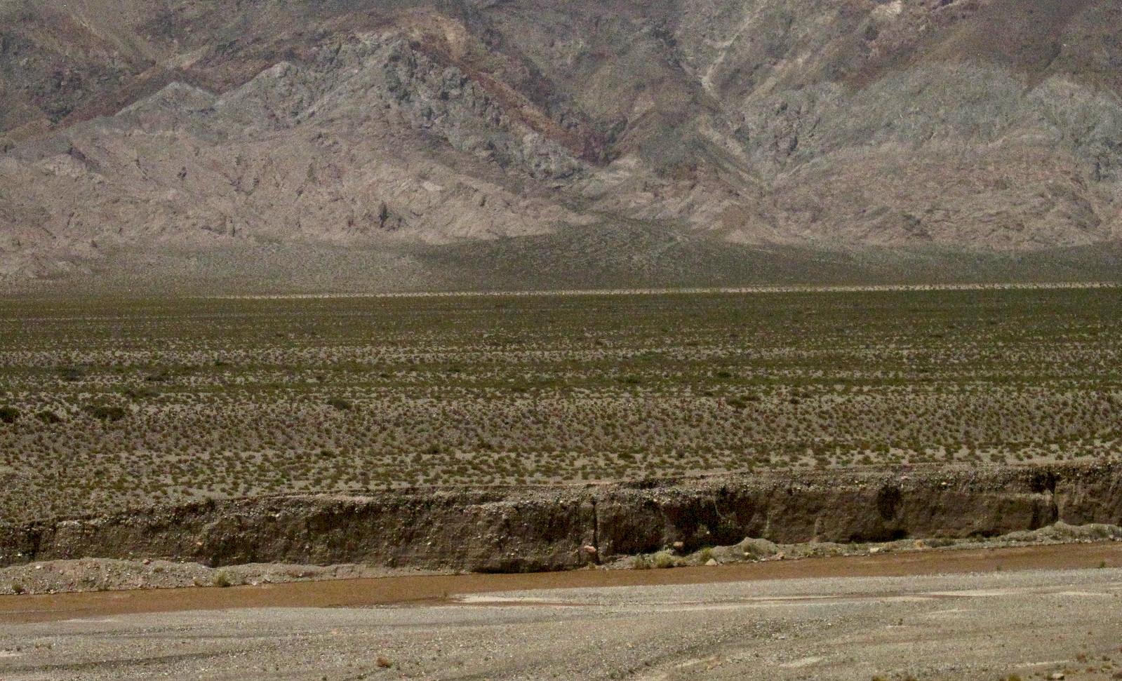 Mendoza 299