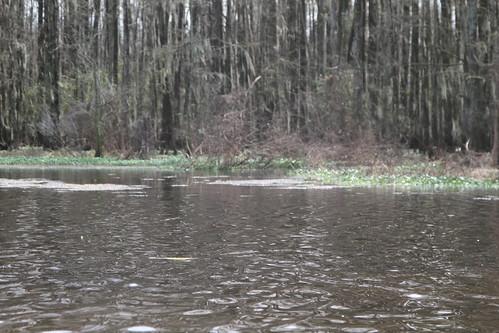 hammond wastewater treatment nitrogen louisiana sewage