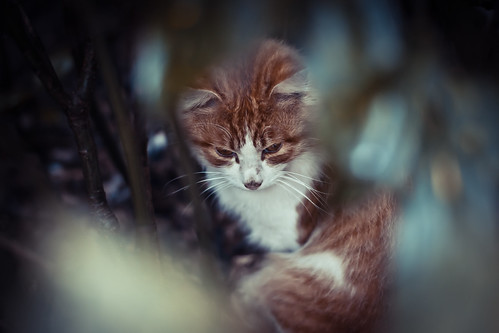 cat in the forest | by YUN-xx