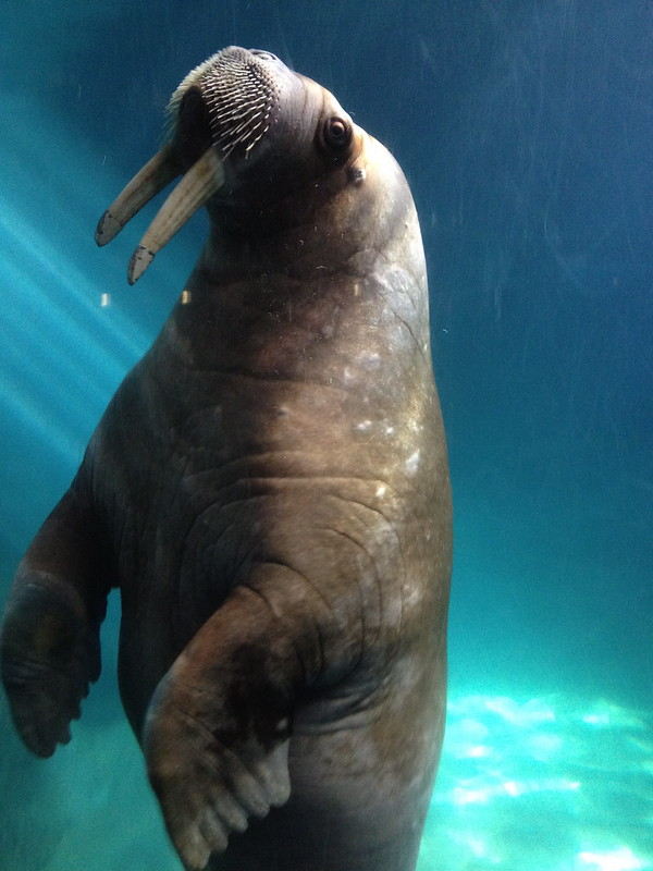 Ryan McGonagill blog - the Walrus