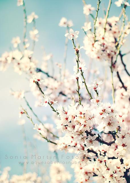 Spring is here! / ¡Ha llegado la primavera!