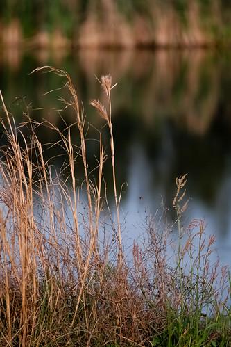 sunset reflection water wintergrass