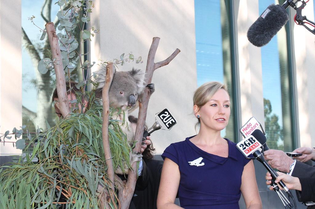 Koala Listing 12