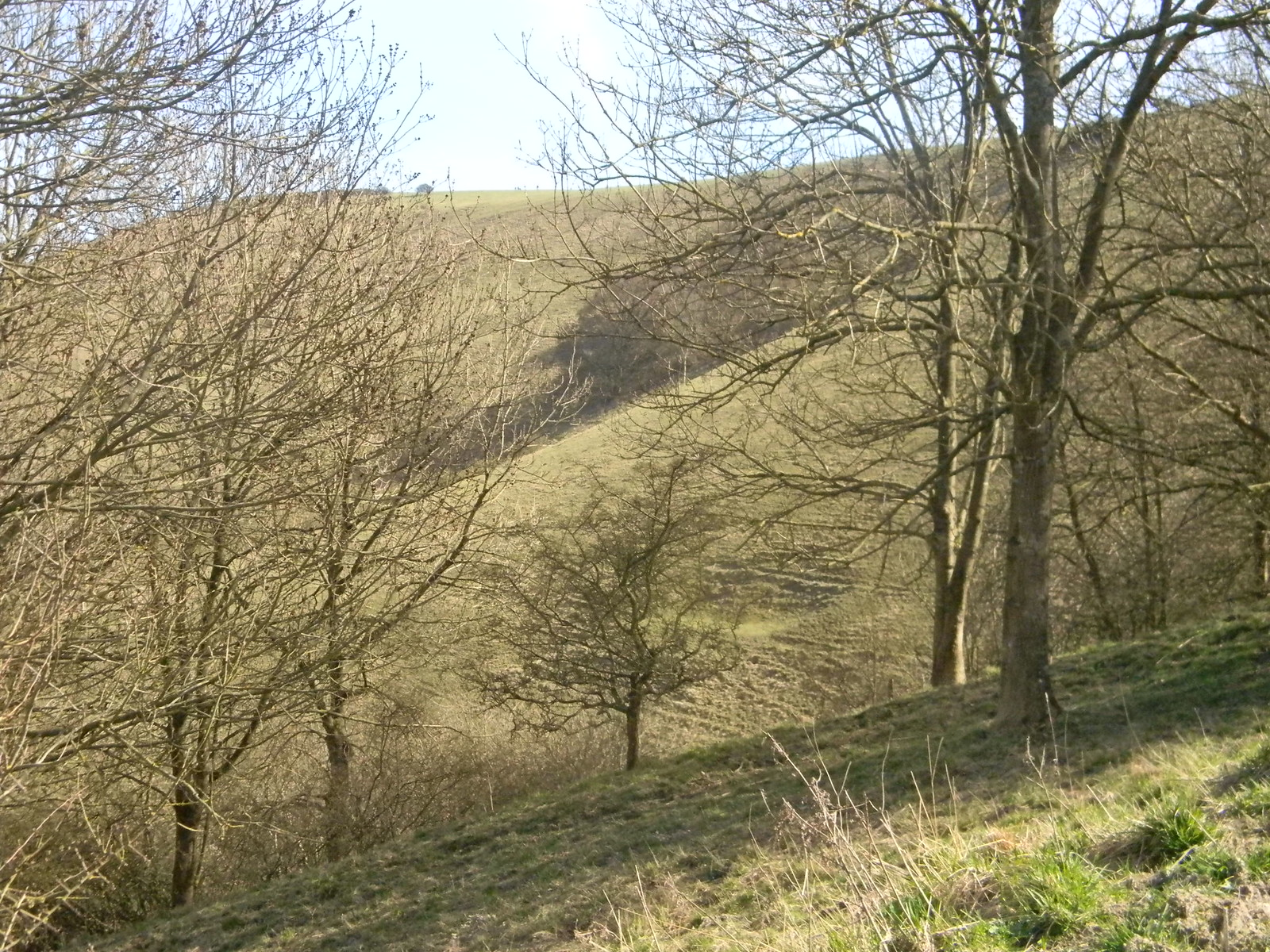 The downs through the trees, Lewes Circular via West Firle