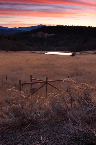 sunset grass forest cascades siskiyou nikond40 desertbuckwheat mikepotts