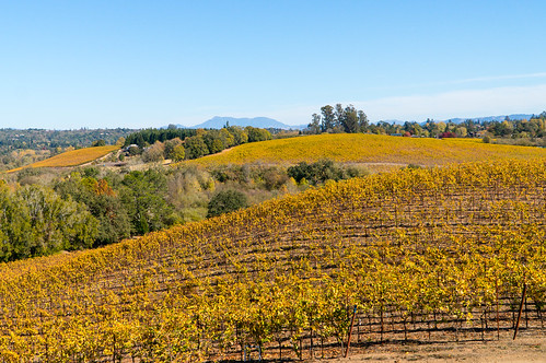 autumn fall landscapes wine country hill sonoma rolling jvineyards ironhorsevineyards