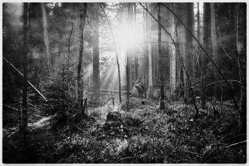 sony ilce7r fe 35mm f28 za a7r sunrise soluppgång dimma foggy morning morgon mist fotografera landscape landskap sweden sverige lindome skog svartvitt sunrays
