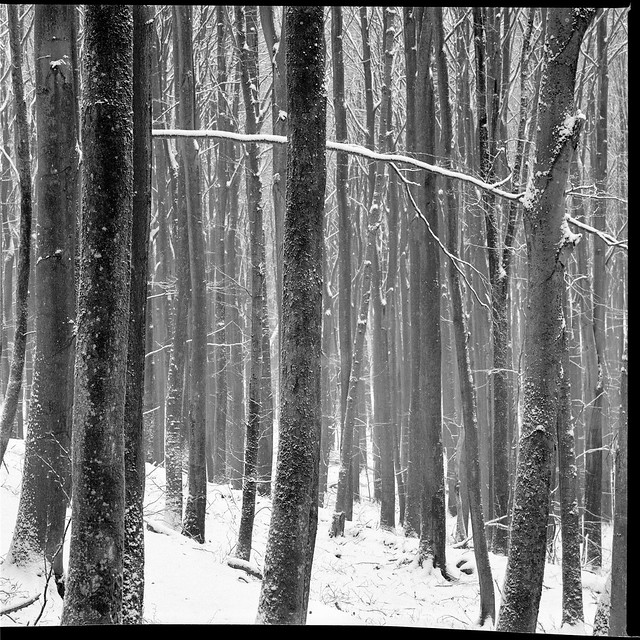 Wintry Woodland - Ilford fp4 125