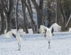 Crane Dance moves by blueeyes_inoki
