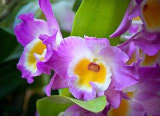 Orchids | by katieharbath