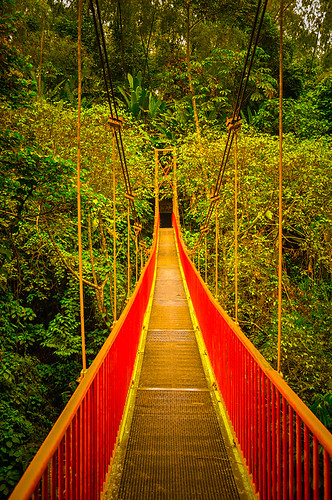 Jardin Botanico Quindio, Colombia | by ablogvoyage