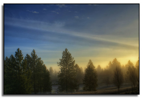 trees fog clouds sunrise washington spokane