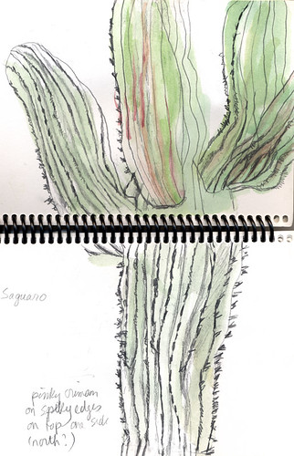 sketch of saguaro cactus