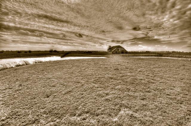 Harsensbosch Groninger landschap