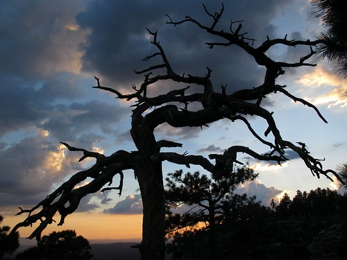 sunset summer arizona sky cliff southwest nature beauty silhouette clouds forest outdoors evening view silhouettes adventure deadtree monsoon edge rim exploration discovery stormysky mogollonrim therim escarpment coloradoplateau colorfulsky outinthewild apachesitgreavesnationalforest zoniedude1 asnf canonpowershotg11 earthnaturelife gnarlydeadtree deadtreesunset approachingdarkness sitgreavesnf 7800ftelevation rimexpedition2012 pspx8