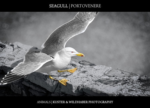 Seagull in Porto Venere | by Kuster & Wildhaber Photography