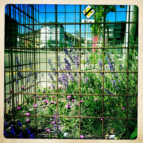 imprisoned flowers | by africarola